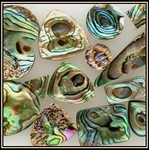 New Zeland Abalone Shell
